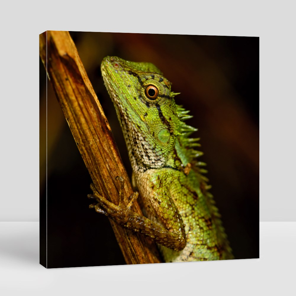 Emma Gray's Forest Lizard Canvas (Square)