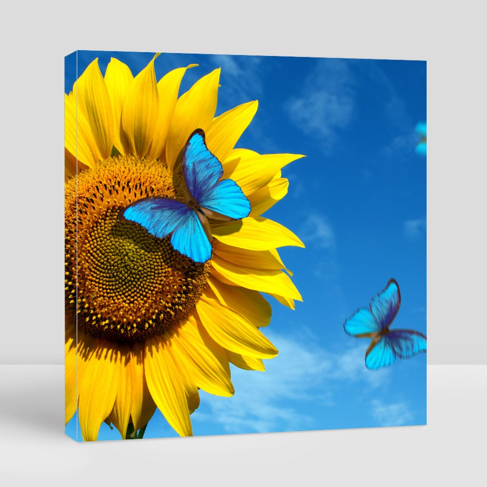 Blooming Sunflowers Canvas (Square)