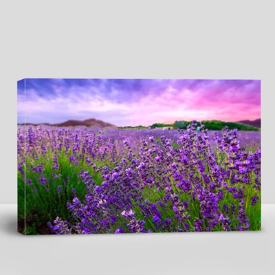 Sunset Over a Summer Lavender Field in Tihany, Hungary 帆布畫(橫向)