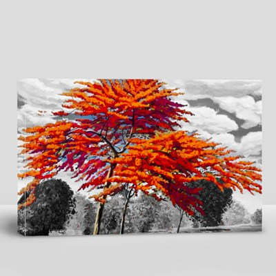 Red Orange Color of Peacock Flowers in the Morning 帆布畫(橫向)